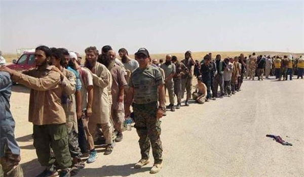 800 Dhaishi handed themselves to the Peshmerga in Kirkuk including 30 leaders Bertha News Agency 42